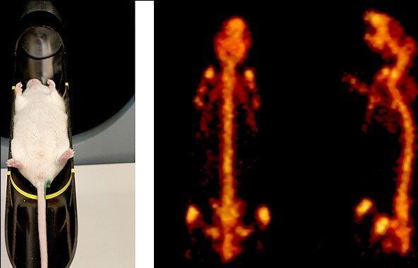 آشتی دوباره محققان با آزمایشگاه های پیش بالینی، آنالیز کاربردهای نانوذرات در تصویربرداری