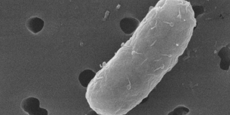 فراوری نوعی آنتی بیوتیک برای بکتری های خاص!