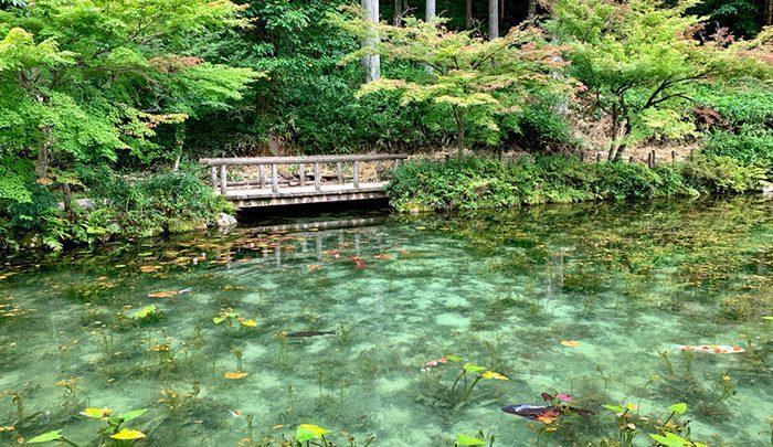 حوضچه مونه ؛ نقاشی واقعیِ طبیعت! ، تصاویر