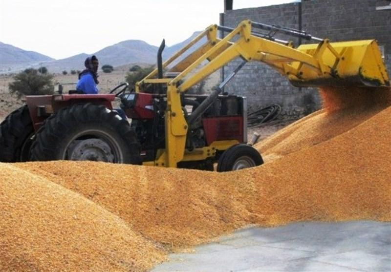 ژاپن واردات گندم کانادا را به دلیل آلودگی به تراریخته معلق کرد