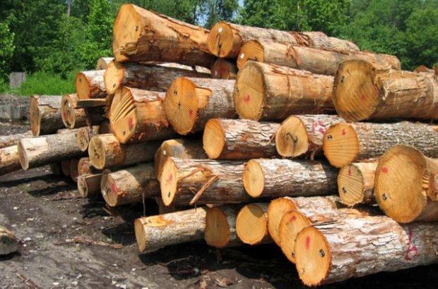 طرح جایگزین جنگلداری با رویکرد برداشت چوب تدوین نمی گردد