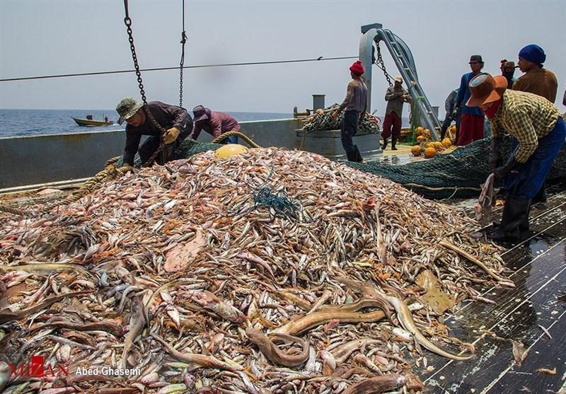 تایید رسمی ماهیگیری چینی ها در آب های عمیق ایران در دریای عمان
