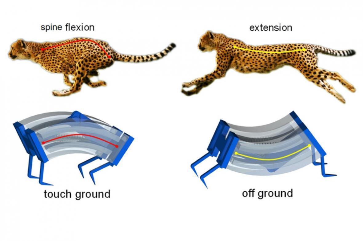 ابداع روبات پرسرعت با الهام از چیتاها