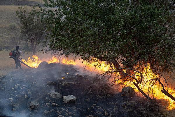 درختان جنگل منطقه گلیل شیروان در آتش سوخت