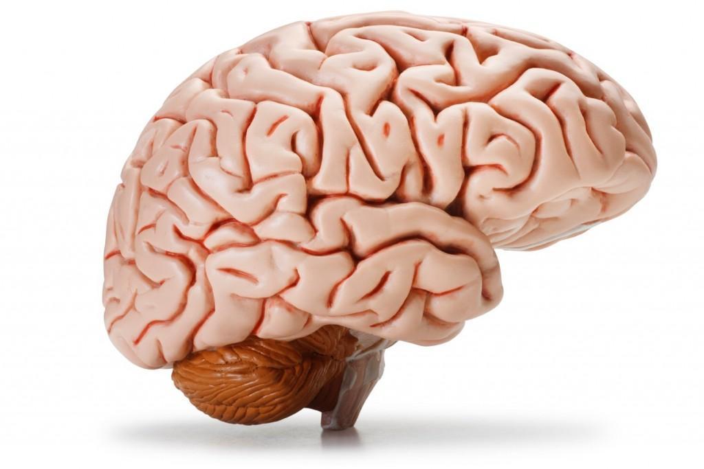 محققان پیروز به خاموش کردن ژن در سلول های مغز قرمز استخوان شدند