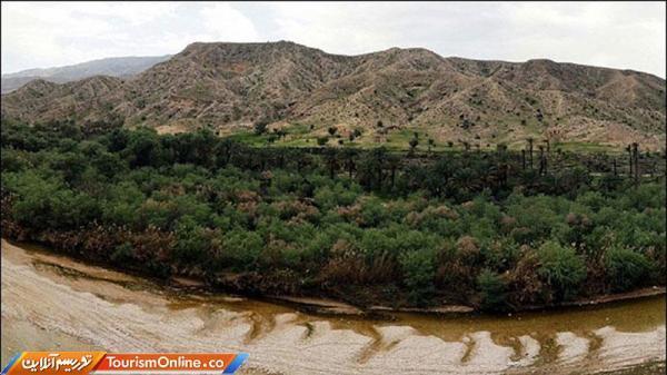 از جنگل حیرت انگیز در جنوب ایران خبر دارید؟، تصاویر